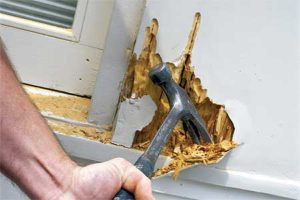 Rotten Wood Issues at Home? Get in a Professional!